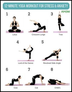 20minute yoga workout for beginners  avocadu  workout