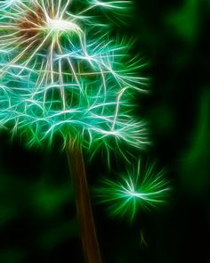 make a wish......