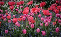 Springtime in Monet's Garden by Pat Kofahl on 500px