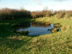 Chanctonbury Dew Pond, West Sussex. Photos from the South Downs in Southern England. #southdowns #sussex http://www.southdownswalking.com/storrington-chanctonbury-ring-walk/
