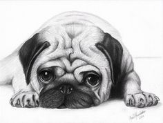 pug puppy sketch - G - Pug Puppies Pencil Drawings Of Animals, Animal Sketches, Drawing Sketches, Puppy Drawings, Face Drawings, Drawing Animals, Cute Pug Puppies, Cute Dogs, Pug Tattoo