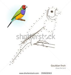 Gouldian finch learn birds educational game learn to draw raster illustration