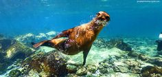 Sea lions, giant tortoises, marine iguanas and more - the first Street View collection of the Galápagos Islands. Charles Darwin, Marine Iguana, Giant Tortoise, Equador, Maps Street View, Galapagos Islands, National Parks, Explore, Fotografia
