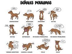 UN GRAN MUNDO LLENO DE ANIMALES: Lenguaje Corporal de los Perros
