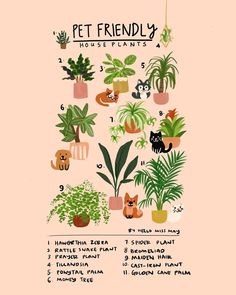 sharing a couple of friendly edible house plants that your fur babies can munch on, if they're feeling cheeky xx Garden Plants, Indoor Plants, Hanging Plants, Money Trees, Inside Plants, Spider Plants, Cactus, Plants Are Friends, Plant Decor