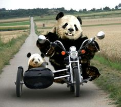 I'm going as fast as I can!!  Why didn't you go before we left ?