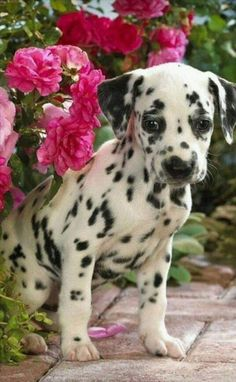 Happy Tuesday, Animals Beautiful, Puppies, Pets, Thoughts, Friends, People, Cutest Animals, Animals And Pets