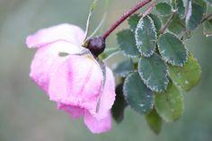 VÅRLI : Frostnetter og solskinnsdager Plants