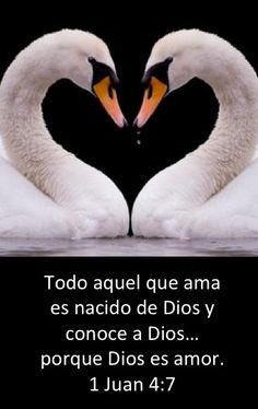 Todo aquel que ama es nacido de Dios y conoce a Dios... porque Dios es amor. 1 Juan 4:7. Buenas Noticias Sin Limite. Evangelio