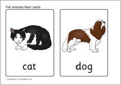 Pet animal flash cards (SB7724) - SparkleBox