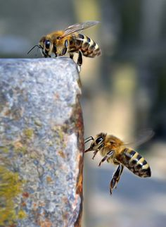 Bees by Sara Pavic