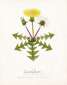 Dandelion Limited Edition Botanical Print by ShopAmySullivan, $20.00