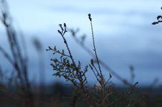 Destellos de otoño Dandelion, Nature, Plants, Photography, Travel, Naturaleza, Photograph, Viajes, Dandelions