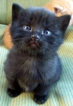 Apr 2020 - Tableau sur les chats,chaton et chatte.Animaux See more ideas about Pets, Cats and Kittens. Cute Funny Animals, Cute Baby Animals, Animals And Pets, Funny Cats, Cute Cats And Kittens, Kittens Cutest, Pet Cats, Beautiful Cats, Animals Beautiful