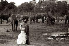 Ask the Expert – Beach, Vineyard, Urban and Safari Weddings in South Africa Safari Wedding, Wedding Pics, Wedding Ideas, Wedding Bells, Wedding Stuff, Dream Wedding, Africa Destinations, Wedding Company, Wedding Honeymoons