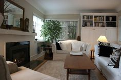 birkenpalme wohnzimmer pflanzenideen zimmerpflanze