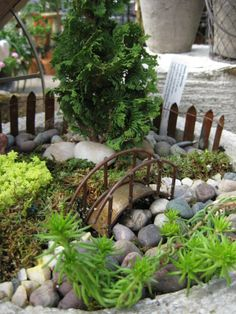 Miniature fairy garden with sedums, false cyprus and mosses.