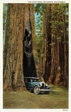 Historische Fotografien: Holzrausch in Kalifornien - SPIEGEL ONLINE - Nachrichten - einestages