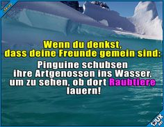 DAS ist gemein! #Pinguine #gemein #Freunde #fies #Sprüche #lustigeBilder #Statussprüche #Statusbilder #Fakt #Fakten Humor