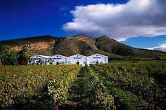 Stunning vineyard views and delicious wine pair perfectly for a day in South Africa wine country!