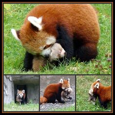Ta Shi and her 3 week old baby boy