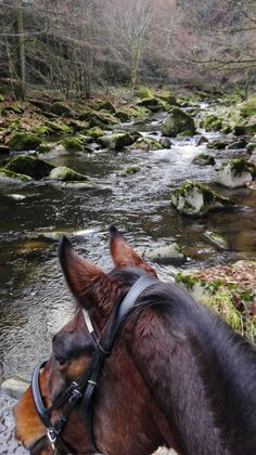 Best view is seen between the ears of a horse