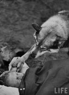 """On a camping trip in the Sierra Madre, Steve McQueen is rudely awakened by his dog Mike, a Malamute. He often takes his whole family along on camping trips, but this time went with old buddies. """"This is it, man"""" says Steve. """"I'd rather wake up in the middle of nowhere than in any city on earth."""""""
