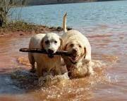 get the stick! get the stick~