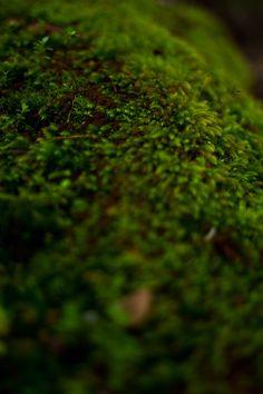 Tropical Green Moss Print - ChristianFarnerPhoto