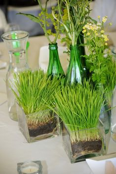 How to plant wheat grass for simple containers. Use wheat berries, results in two weeks.