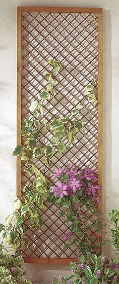 Framed Willow Trellis 183 x 30cm | Forest Garden