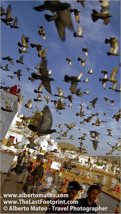 Doves over Pushkar Lake during Pushkar Camel Fair. It's difficult fo find a place on Earth where you can get so incredible portrait and reportage photographs! World Most Beautiful Place, Beautiful Places To Visit, Amazing Places, Fine Art Photography, Amazing Photography, Street Photography, Travel Photographer, Nice View, Wonders Of The World
