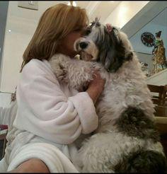 Delícia de companhia. Como um cãozinho pode ser tão amigo, fiel e companheiro? Cookie, uma fas paixões de minha vida.