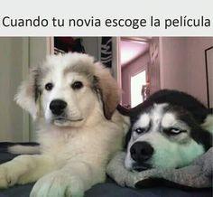 #humor #toquedehumor