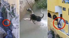 Punish couple that threw dog off a high cliff because the animal bugged them! | YouSignAnimals.org