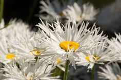 Summer Daisy by Katherine Blake on 500px