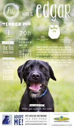 I'm Looking For My Forever Home! // awesome infographic-style poster campaign by the FURminator in support of the Pet Rescue Network of St. Louis, Missouri via the Chic Type Blog