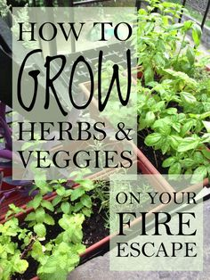 How To Grow Herbs And Veggies When You Live In A City Apartment
