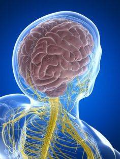 What You Need to Know About Nerve Pain! I live with it everyday, for the past 16 years.