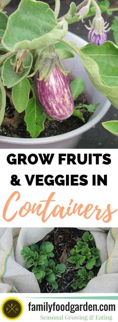 Fruits and Vegetables you can Grow in Containers