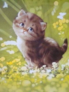 Common Health Problems Of Cats Fat Cats, Cats And Kittens, Cat Art, Japanese Art, Dog Cat, Cute Animals, Drawings, Illustration, Paintings