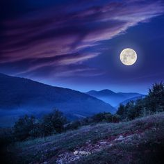 forest on a steep mountain slope at night in full moon light - Buy this stock photo and explore similar images at Adobe Stock My Photos, Stock Photos, Story Inspiration, Full Moon, Moonlight, Explore, Night, Nature, Mountain
