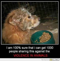 LolDome - No violence in animals!  To think, we have to lobby to try & get people!