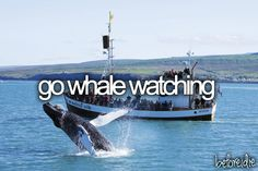 Bucket list. Whale watching & see a whale. Bee whale watching but didn't see any whales.