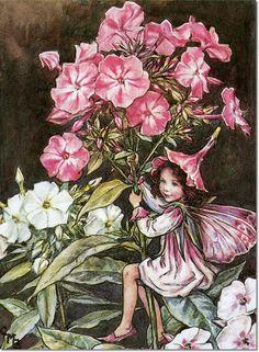 Cicely Mary Barker - Flower Fairies of the Garden - The Phlox Fairy