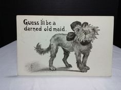 """Post Card """"Guess I'll be a darned old maid"""", Dated 9/23 1910 Stamp DOG"""