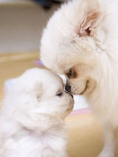 34 New Ideas For Dogs And Puppies Chihuahua Pets Baby Dogs, Pet Dogs, Dog Cat, Doggies, Babies With Dogs, Fur Babies, Cute Baby Animals, Animals And Pets, Funny Animals