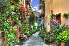 Flower competition (Infiorata) in Spello, Italy