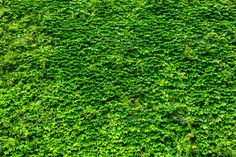 Green plant wall - Stock Photo - Images
