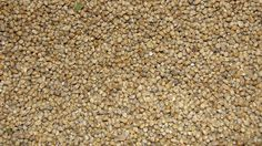Can degus eat millet? We take a look and check out whether degus can eat millet or whether it should be avoided altogether. Indian Food Recipes, Healthy Recipes, Degu, Ornamental Grasses, Pet Care, How To Dry Basil, Health Benefits, Seeds